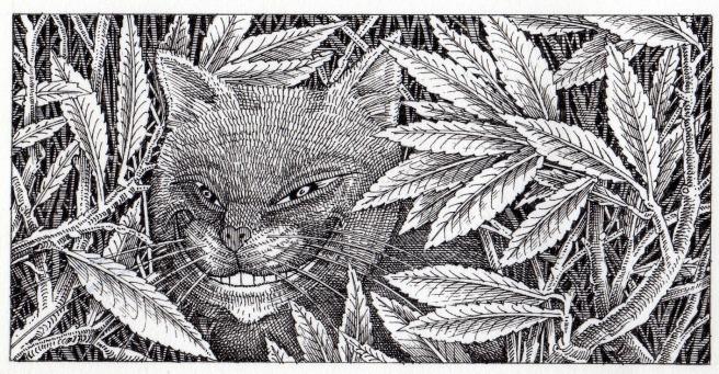 Cheshire+Cat+(1)122[1]