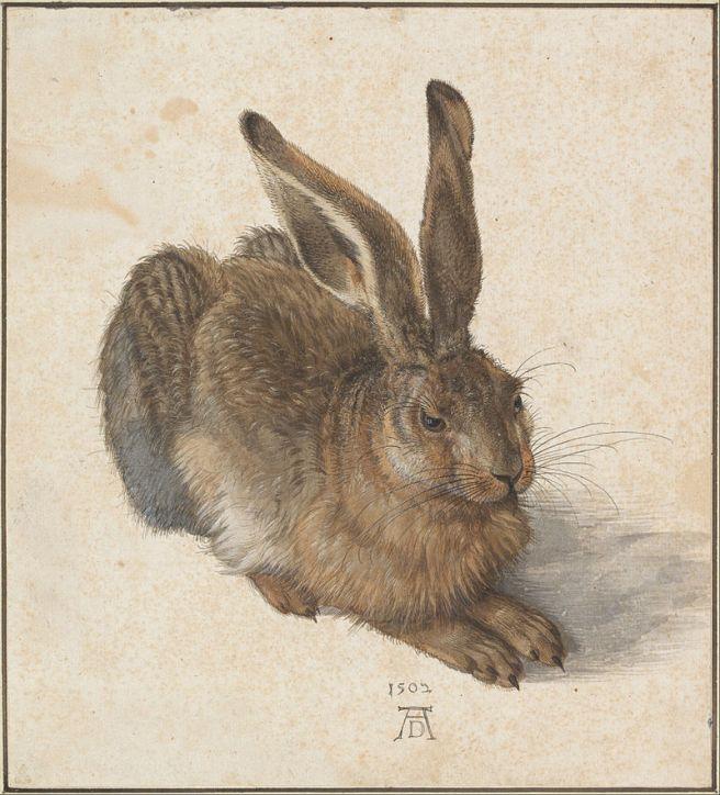 Albrecht Dürer-Hare-1502
